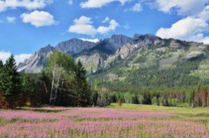 kanada hory a louka